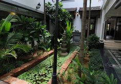 The green courtyard is the home's fulcrum.