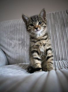 If I had a kitten I would name him Mr. Fuzzybutt!  :3