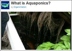 Aquaponics video 00:04.