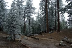 24 Best Boulder Basin Campground, Idyllwild, CA images in