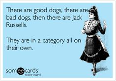 There are good dogs, there are bad dogs, then there are Jack Russells. They are in a category all on their own. | Encouragement Ecard | someecards.com