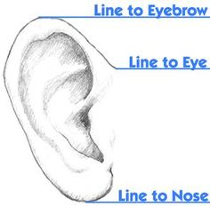 ear to eyebrow/eye/nose alignment reference | How Do It Info