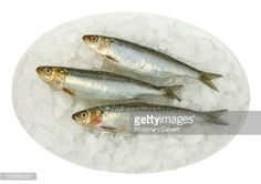 Sardine Fish On White Background Stock Photo | Getty Images