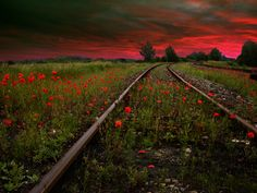 Gorgeous picture of forgotten railroad tracks.  Love it!
