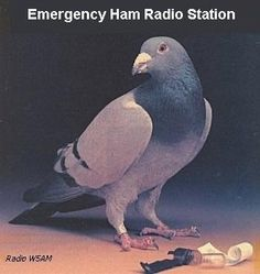 Pigeon Ham Radio