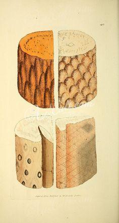 040-silex arenacea, Siliceous Sandstone      ...