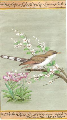 Yellow Billed Cuckoo Bird Art Handmade Indian Miniature Ornithological Painting