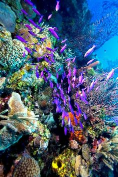 Ocean #belize #barrierreef #ambergriscaye #travel #lifestyle #realestate #luxury #ambergriscayerealty