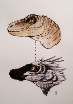 Velociraptor - How we first viewed them 'till now