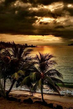 Palm trees edge of ocean sunset cloudy Beautiful Sunrise, Beautiful Beaches, Foto Picture, Exotic Beaches, Peru Beaches, Sea And Ocean, Belle Photo, Beautiful Landscapes, Palm Trees