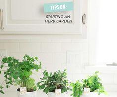 Tips On Starting An Indoor Herb Garden