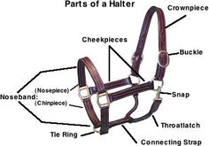 Parts of the Horse Worksheet | Western and English Bridle ...