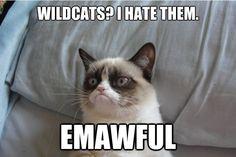 Grumpy cat thinks K-State sucks.