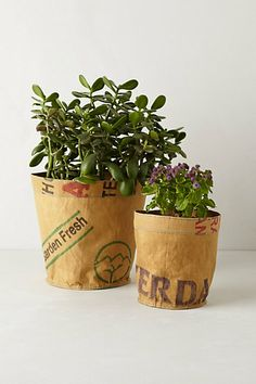 Reclaimed Tea Sack Planter -- I must need this, right?