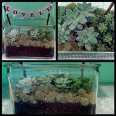 succulent garden terrarium - vintage glass battery box