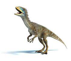 Coelurosauria (pronounced /sɨˌljʊərəˈsɔriə/) is the clade containing all theropod dinosaurs more...