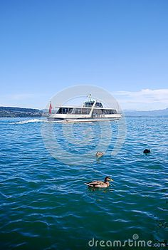 Photo about Regular Swiss boat buss sailing wit passengers on a blue lake. Some wild ducks swim in the foreground. The sky is blue and the water is calm. Image of boat, excursion, scenic - 60778807 Busses, Ducks, Sailing, Travel Destinations, Swim, Europe, Boat, Stock Photos, Water