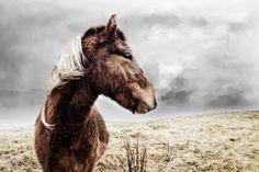 Hestar / Horses by Daniel Harðarson, via Behance