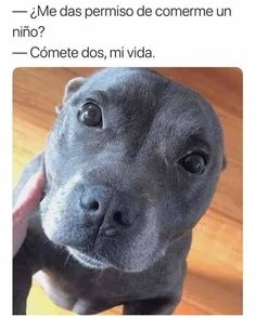 There are no bad dogs, just bad dog owners. Funny Animal Memes, Funny Animals, Cute Animals, Funny Gifs, Pitbull Terrier, Dog Love, Puppy Love, Pit Bull Dogs, Cute Puppies