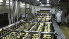 Kladenská pekárna La Lorraine denně vychrlí na 300 tisíc donutů. Většinu z nich snědí Češi, zhruba 40 procent míří do zahraničí. Jde o jedinou takovou linku v Česku.