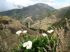 Timbac, the Highest Mountain in Luzon ~ Pinoy Adventurista Philippines Travel Guide, Mountaineering, Pinoy, Travel Guides, Hiking, Adventure, Mountains, Walks, Mountain Climbing