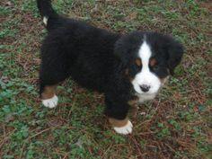 Winnie, 8 weeks old