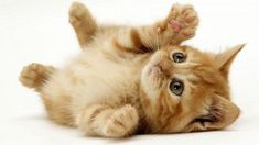 Cats and their magic power? | SiOWfa15: Science in Our World ...