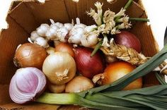 Chris Wark's Top 10 Anti-Cancer Vegetables