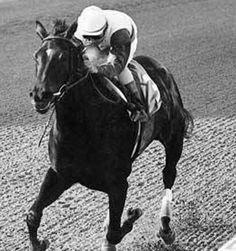 July  6 - Ruffian, an American champion thoroughbred racehorse breaks down in a match race against Kentucky Derby winner, Foolish Pleasure. She had to be euthanized the following day.