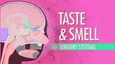 Taste & Smell: A&P #16