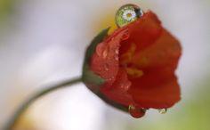 まるで異次元!小さな水滴の中から覗いた花が別世界のように美しすぎる | IDEA HACK