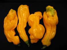 Malaysian Goronong Habanero Pepper Seeds (Capsicum chinense) Aromatic scent and have potent heat, An uncommon variety. !