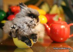 roundhouse kick bunny