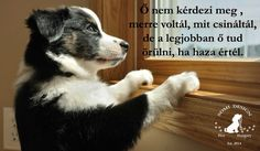 Pet Dogs, Dogs And Puppies, I Love Dogs, Animals And Pets, Squirrel, Diy And Crafts, Corgi, Spirituality, Horses