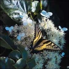svenska naturbilder Dandelion, Flowers, Plants, Animals, Nature Pictures, Animaux, Flora, Animal, Animales