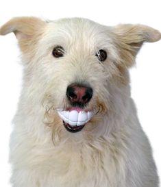 Sink your teeth into the brand new Humunga Chomp!