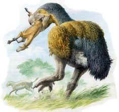 "Giant bird, ""Gaston's Bird"", Diatryma gigantea"
