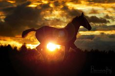 silhouette horse photography