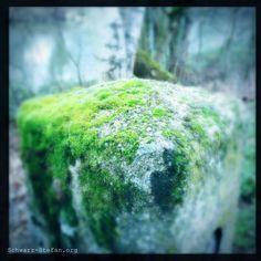 Impressionen | Natur – Stenorkunst