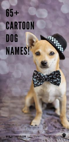 If you are seeking a cute and amazing cartoon dog name, this is a great spot for you! You can find here a lot of great female and male dog names. Top 10 Cartoon Dog Names 10 absolute classics and my favorite cartoon dog names! Nana Lady Tramp Perdita Pongo Pluto Balto Snoopy Mr. Peabody Jasper #Cartoon DogNames #DogNames #TOPCartoon DogNames #BestCartoon DogNames #CuteCartoon DogNames #Cartoon DogNamesMale #Cartoon DogNamesFemale Cool Female Dog Names, Puppies Names Female, Best Dog Names, Puppy Names, Pet Names, Corgi Dog Breed, Pet Dogs, Pets, Beagle