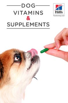 Dog vitamins are not right for every dog. Dig into common types of vitamins your vet might prescribe and why some supplements are not good for your pup. Dog Vitamins, Cat Nutrition, Dog Boarding, Dog Names, Four Legged, Fur Babies, Dog Food Recipes, Healthy Life, Corgi