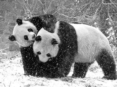 forever-young-amazing-animal-love-animals-Favim.com-586332.jpg 500×375 pixels