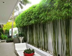 Enjoy your relaxing moment in your backyard, with these remarkable garden screening ideas. Garden screening would make your backyard to be comfortable because you'll get more privacy. Bamboo Landscape, Modern Landscape Design, Garden Landscape Design, Modern Landscaping, Backyard Landscaping, Landscaping Ideas, Backyard Privacy, Privacy Plants, Garden Privacy