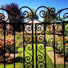 Instagram user @cpliston got a great shot of our rose garden. Santa Clara University rose garden.