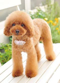 ラブリー❤BOO --愛犬の友 ヘアスタイルカタログ--