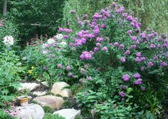 southern gardens | Zuni Gives 100 Days of Blooms! | Gardening with Confidence & Plants ...