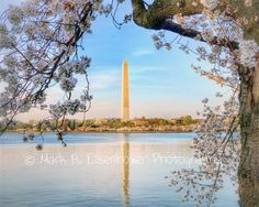 Washington DC Photography Spring Cherry by IllustrationsByMark, $20.00