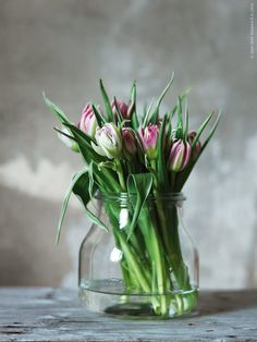 Beautiful white and magenta flowers