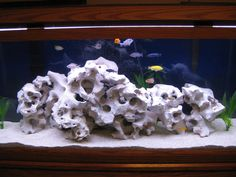 Texas Holey Rock Cichlids | cichlids.com: texas holy rock 1