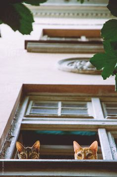 Two curious cats looking out of the window